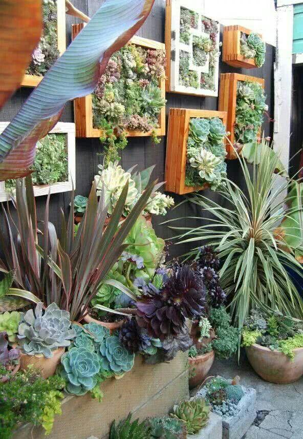 Jardim de inverno pequeno com plantas suspensas