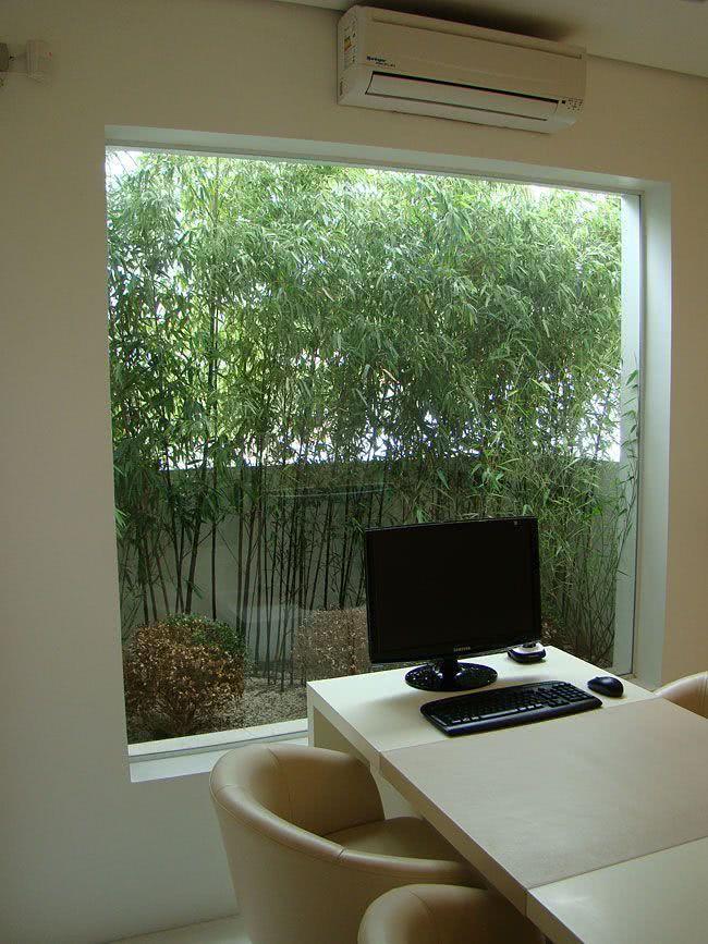 Jardim pequeno entre o muro e a janela