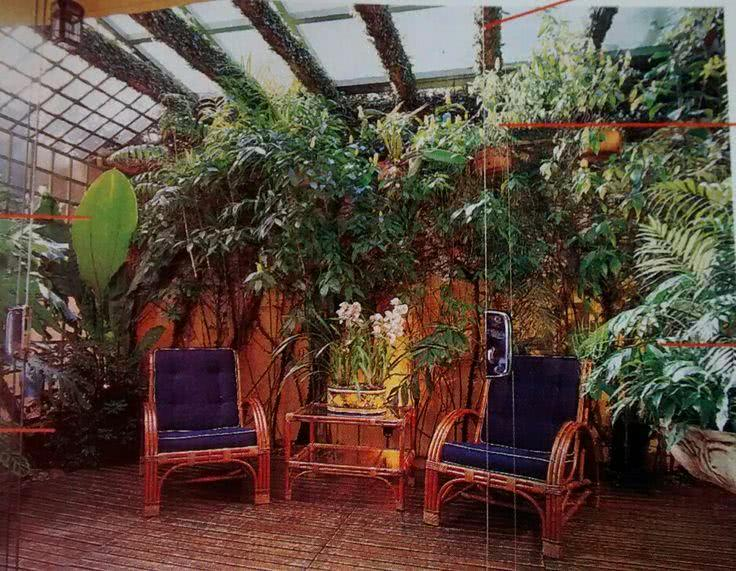 Jardim de inverno com plantas suspensas