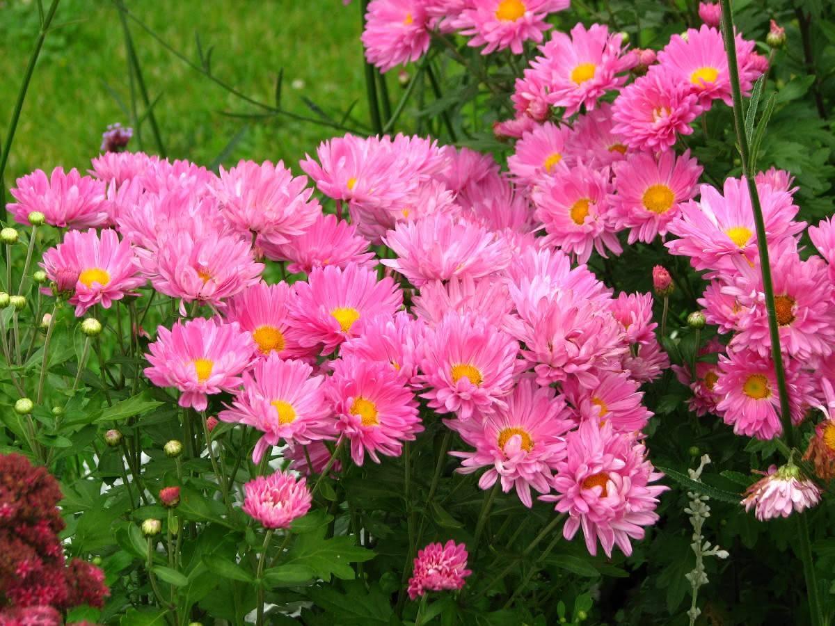 50 Espécies de Flores para o Seu Jardim Ficar Colorido