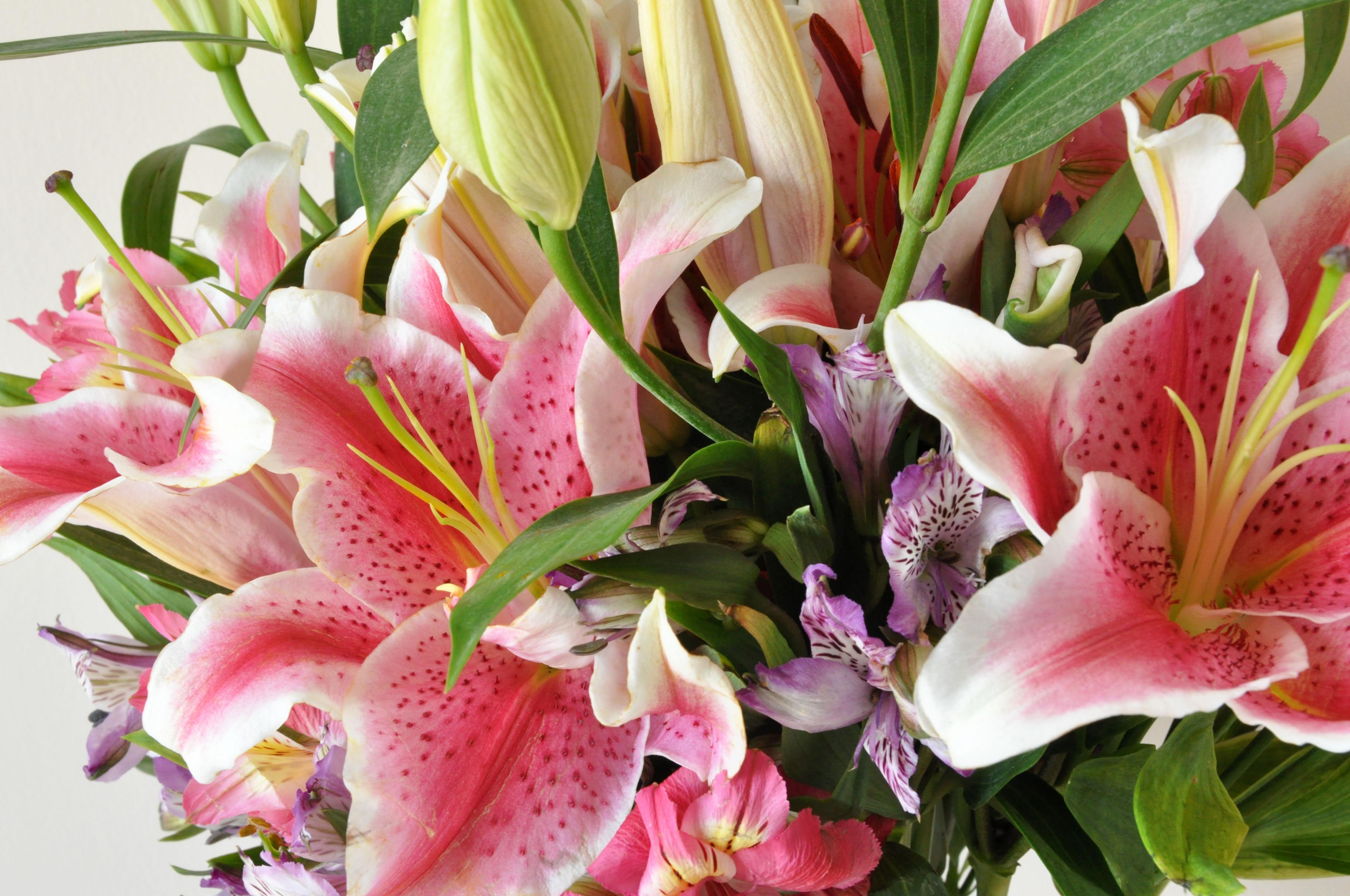 50 Esp?cies de Flores para o Seu Jardim Ficar Colorido