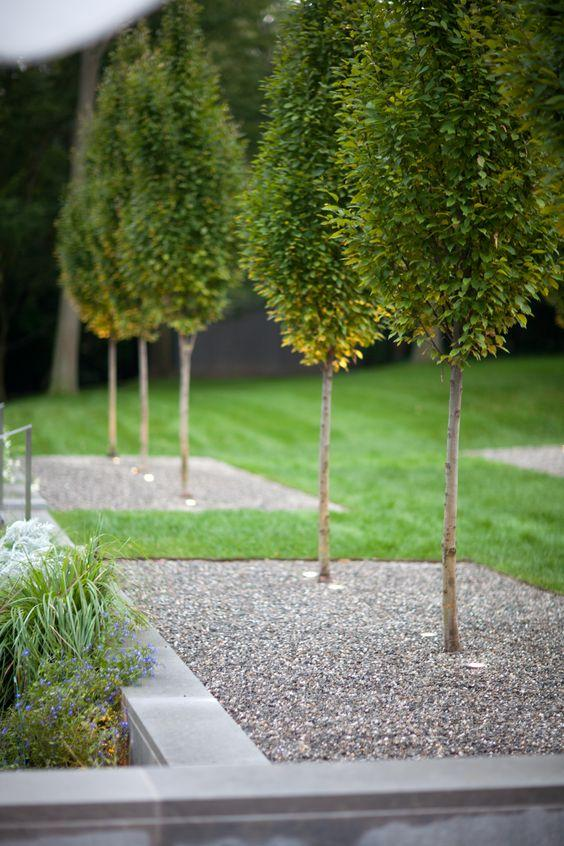 60 jardins com pedras decorativas fotos lindas - Tall trees for small spaces style ...