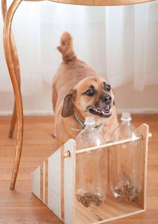 Garrafas pet para colocar ração de cachorro