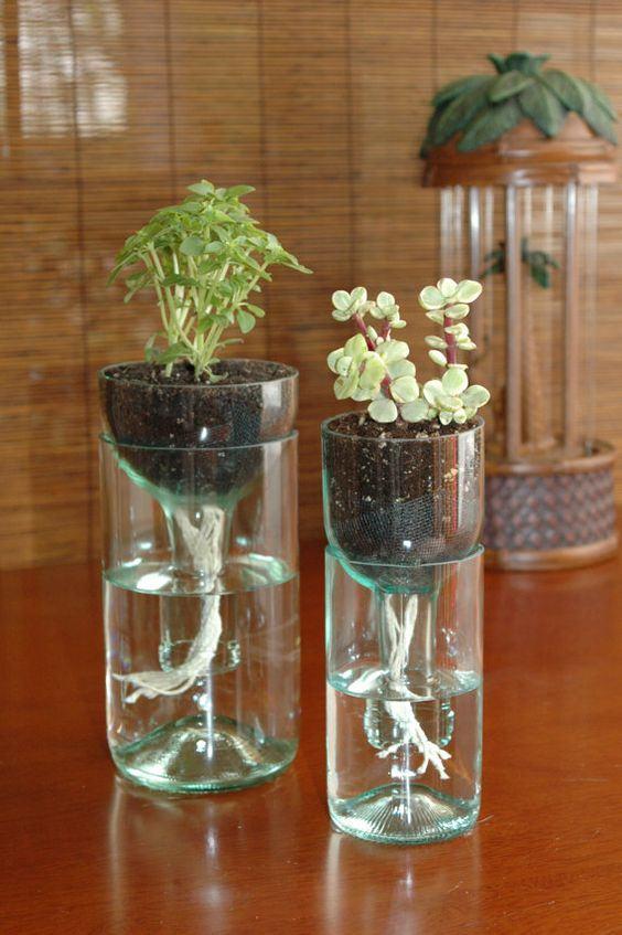 Garrafa de vidro cortada como vaso de plantas.