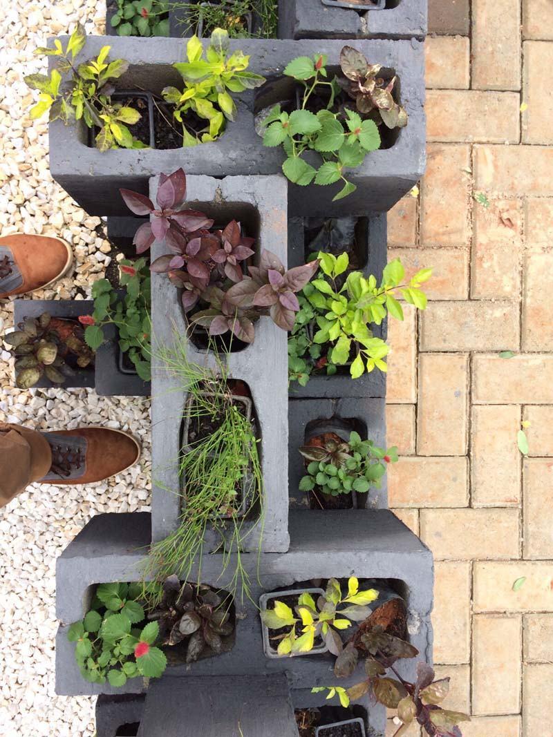 Jardim simples 60 ideias fotos e passo a passo for Plantas baratas