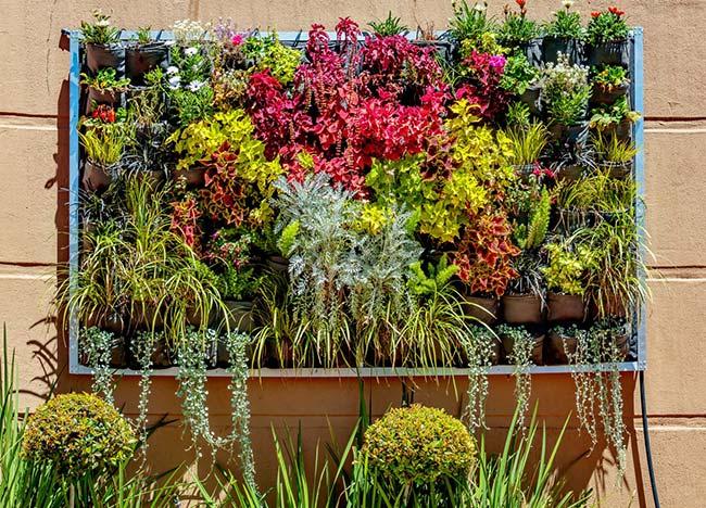Quadro azul celeste abraça as diferentes e coloridas espécies de plantas