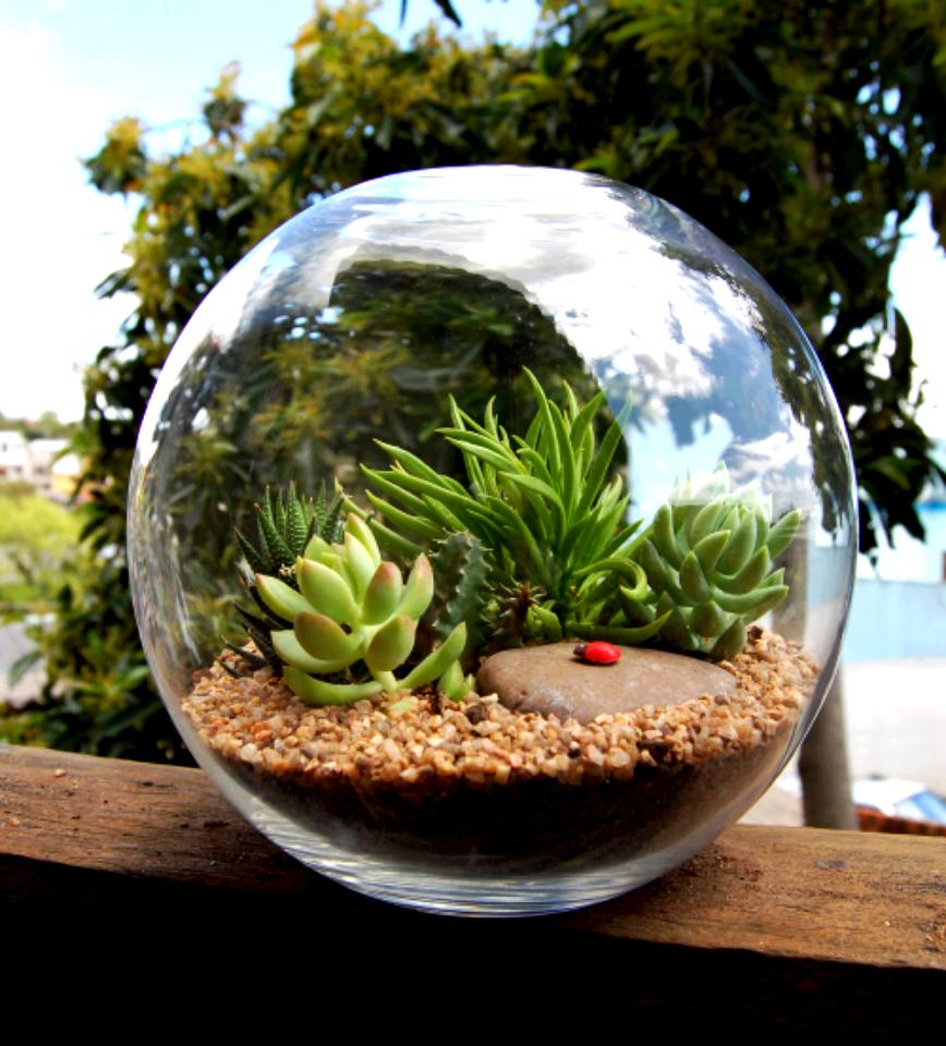 Terr rio 60 modelos plantas e como fazer passo a passo - Como construir un terrario ...
