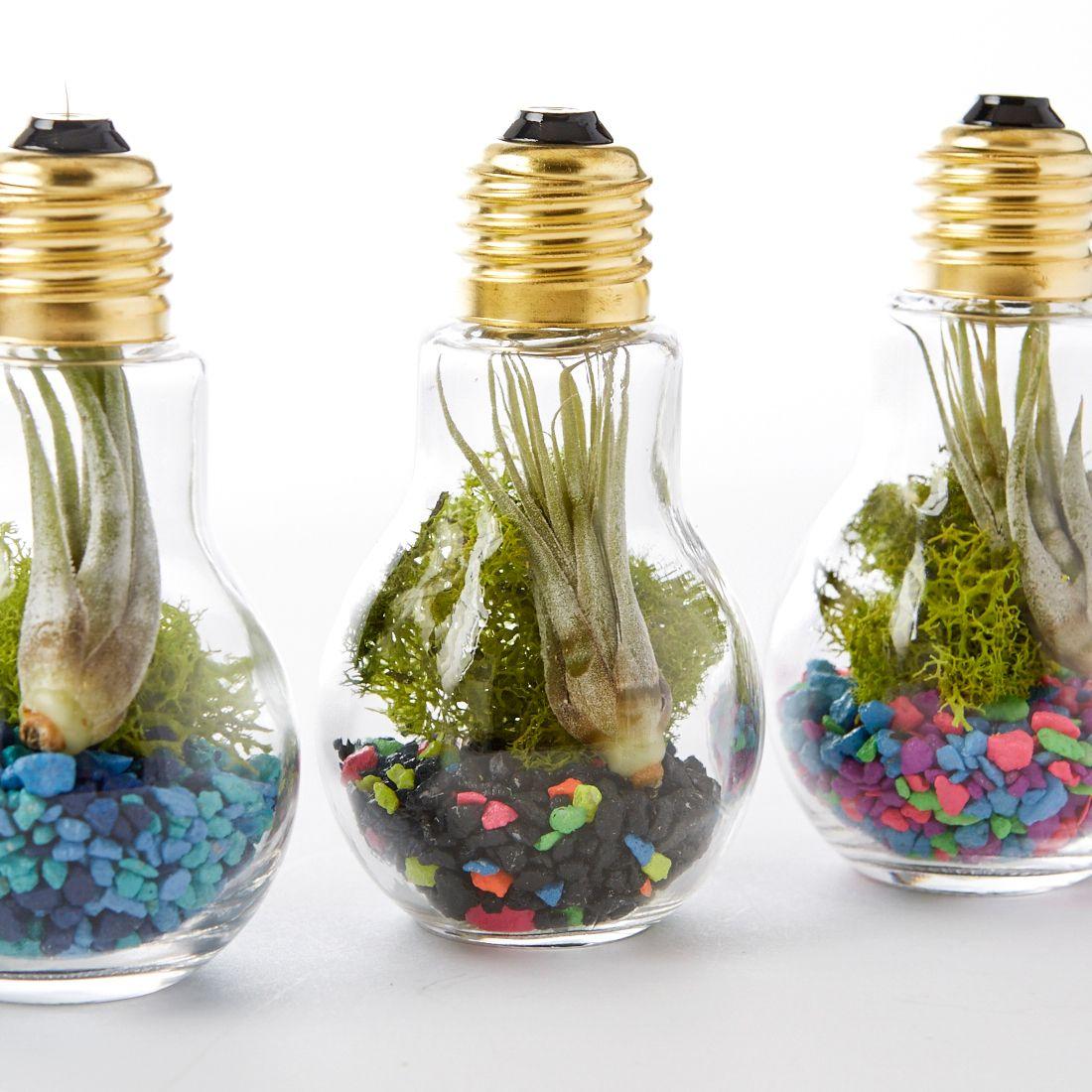 Terrários criados em mini lâmpadas