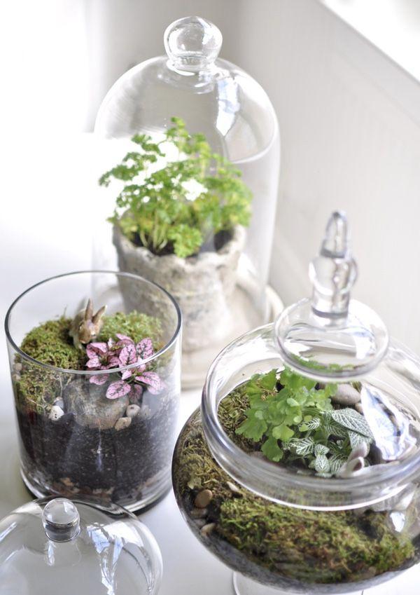 Terrário para os amantes de potes de vidros