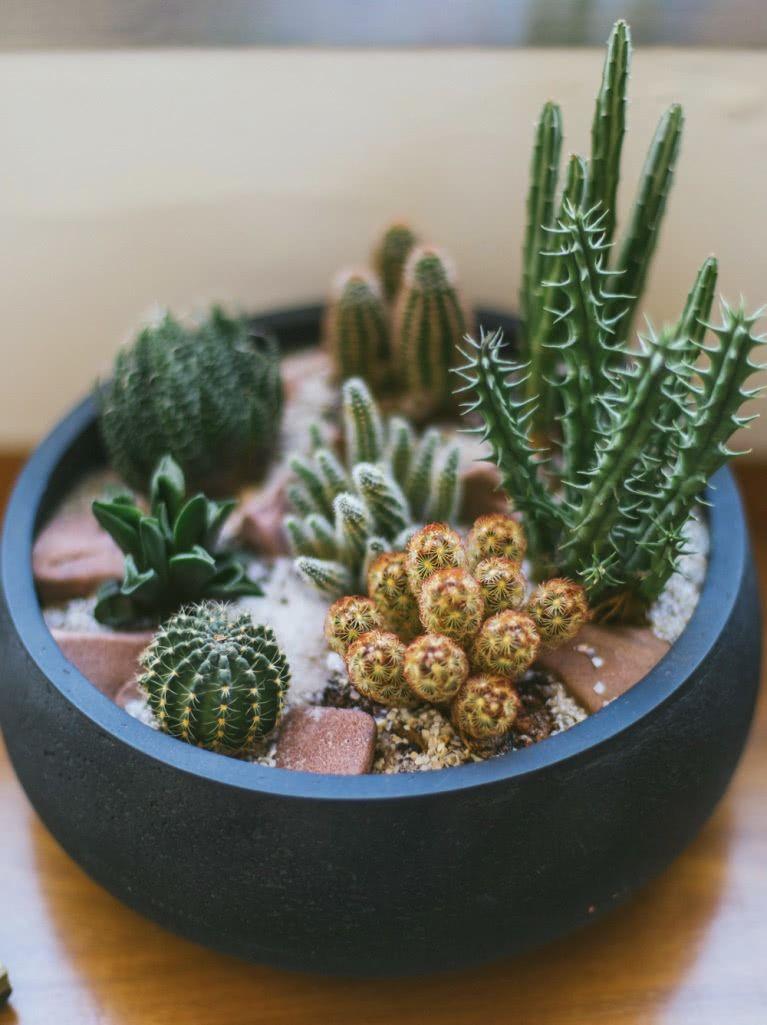 Utilize um vaso maior para montar uma composição com as suculentas.