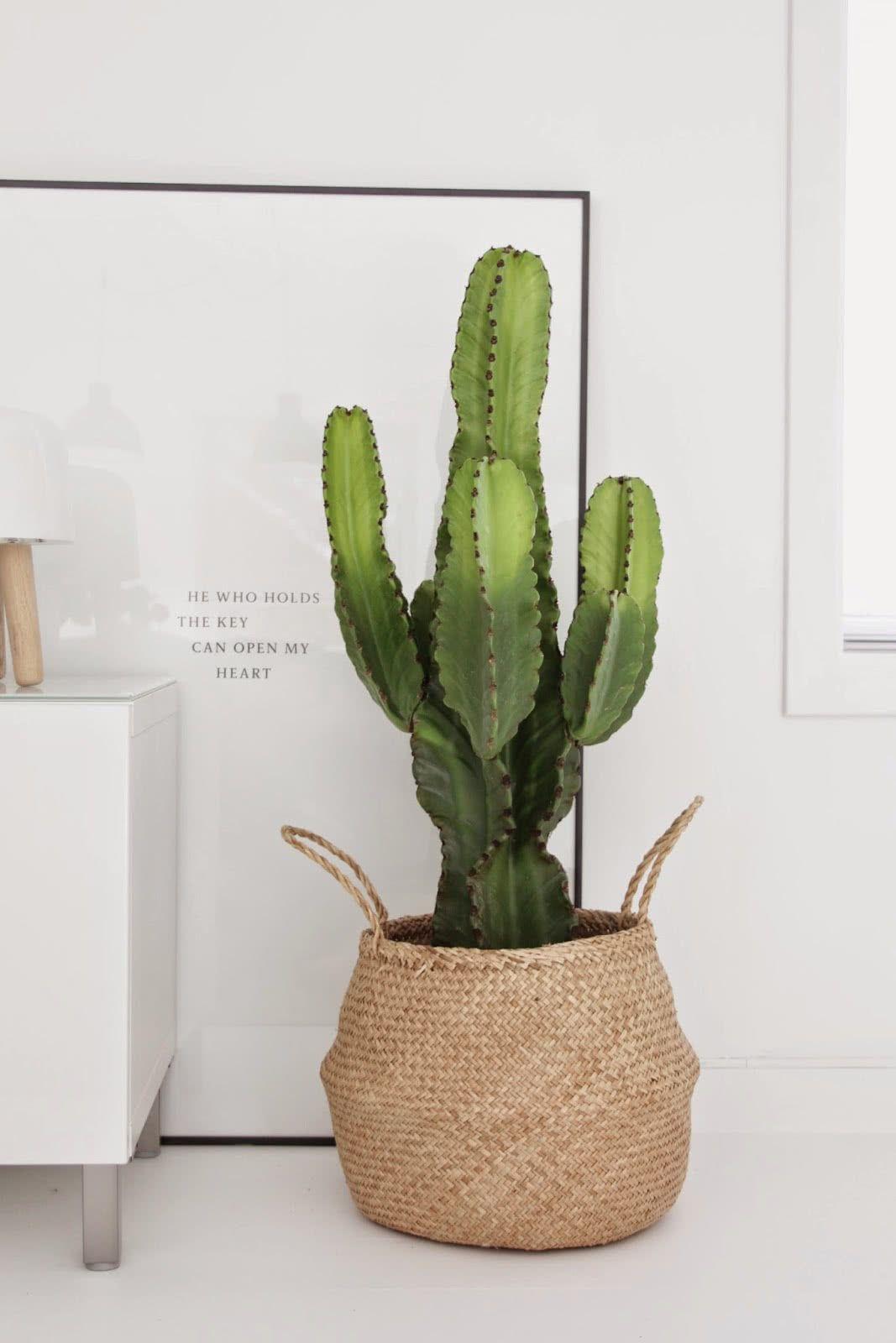 Substitua os tradicionais vasos por cestos.