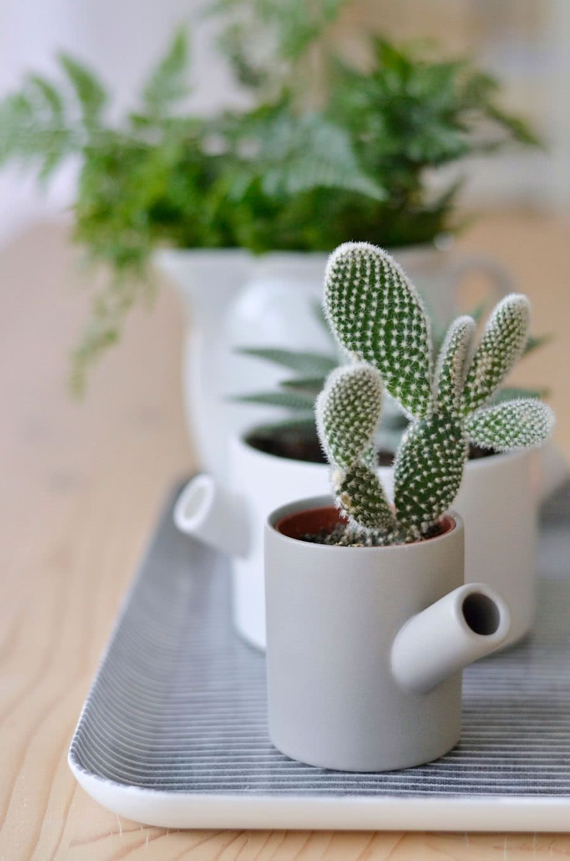 Utilize os recipientes de cozinha para apoiar seus cactos.