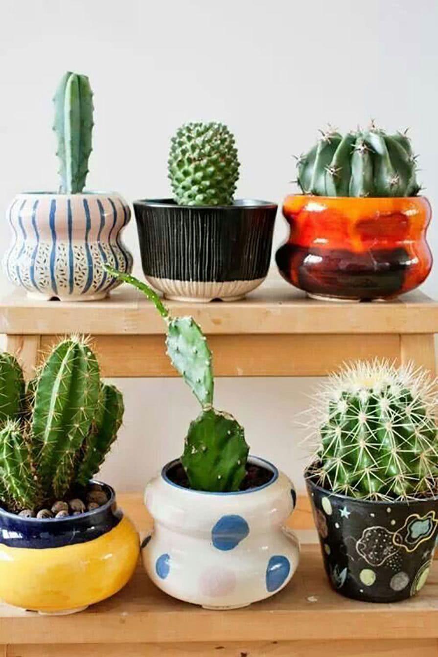 Outra dica é montar em vasos diferentes formando uma composição colorida.