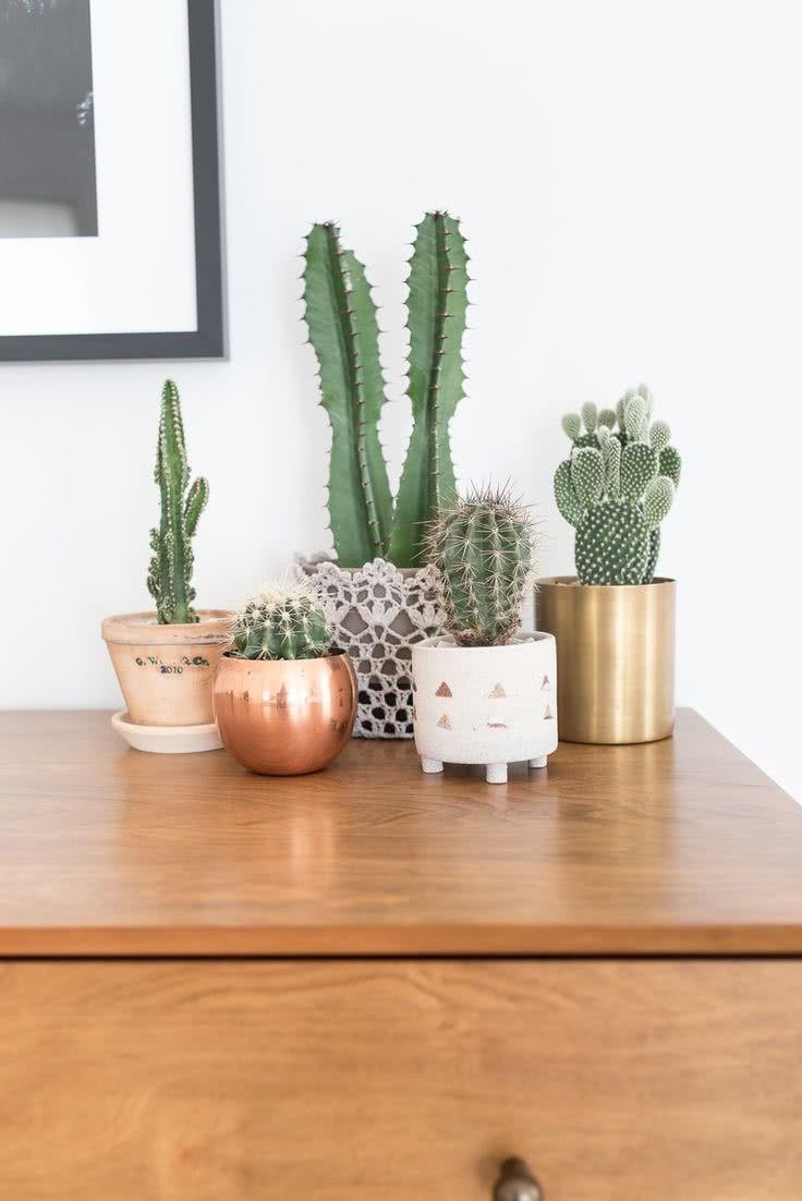 cactos em casa 60 inspira es de decora o com a planta. Black Bedroom Furniture Sets. Home Design Ideas
