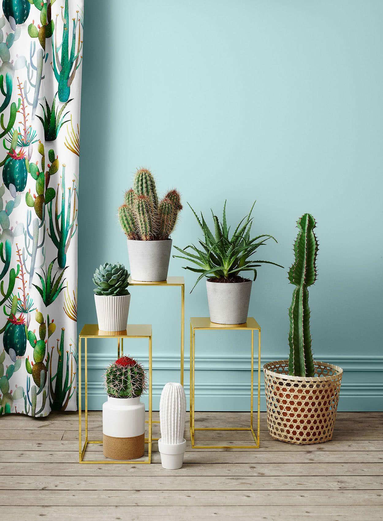 Os cactos podem combinar com toda a decoração.