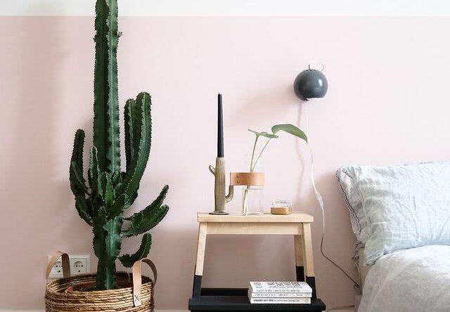 Cactos em casa: 60 inspirações para decorar com a planta