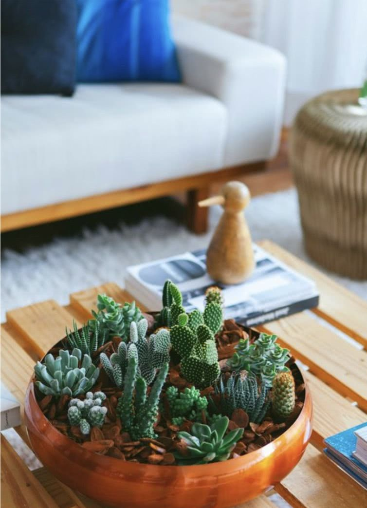 Você pode utilizar pratos fundos para montar um jardim com pequenas suculentas.