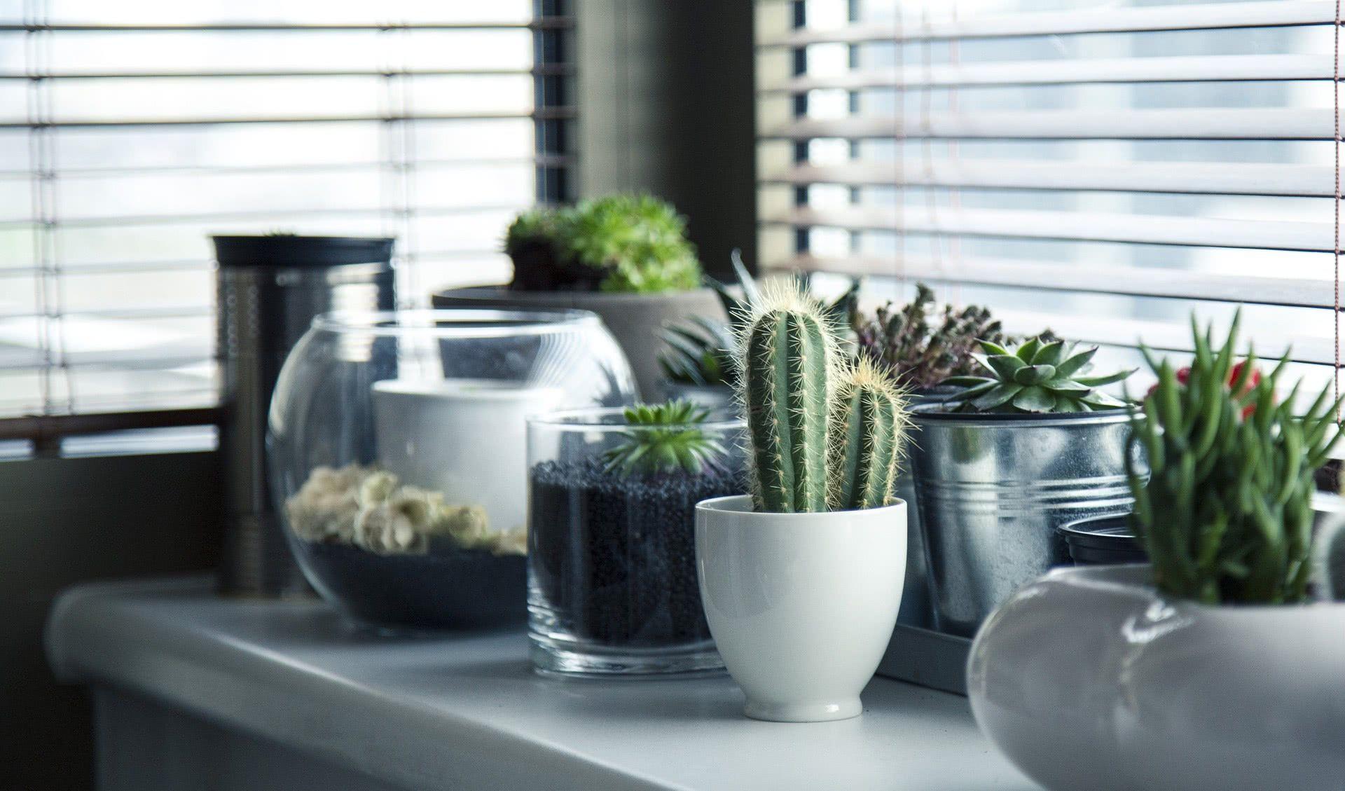 Insira pequenos vasos sobre o peitoril da janela