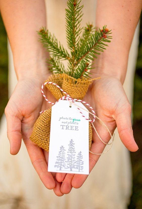 Planta uma árvore e espalhe vida!