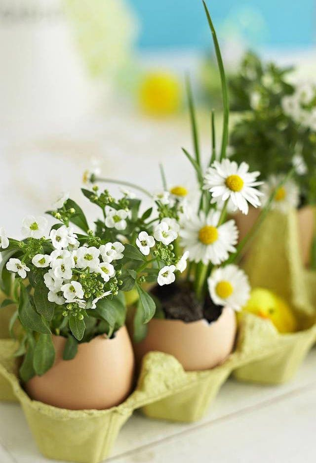 Caixas de ovos como apoio para ovos verdinhos