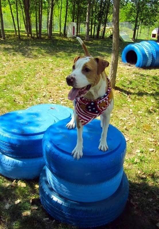 Para treinar e exercitar os seus pets