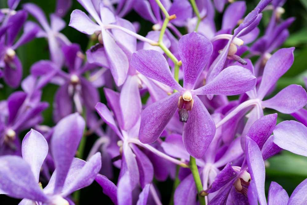 Como cuidar de orquídeas: 5 dicas essenciais para seguir