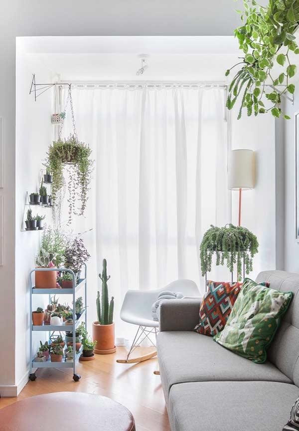 Almofadas com cores vivas que combinam com as plantas