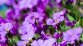 Como cuidar de violetas: 13 dicas essenciais para seguir