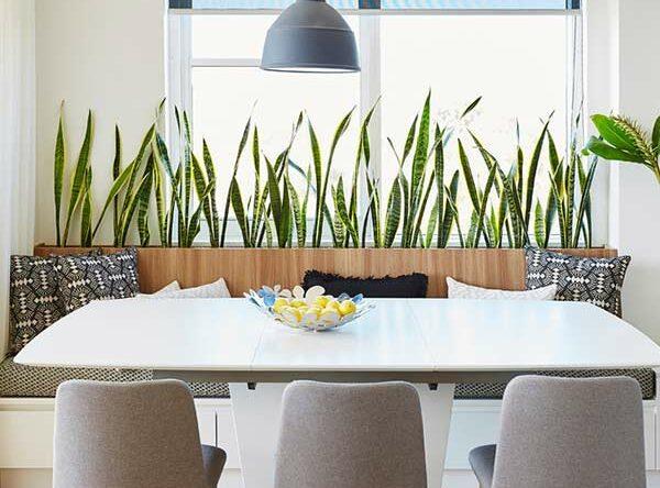 Espada de São Jorge: como cuidar e 60 fotos ambientes com a planta