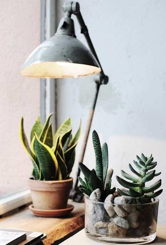 Cantinho das plantas na escrivaninha