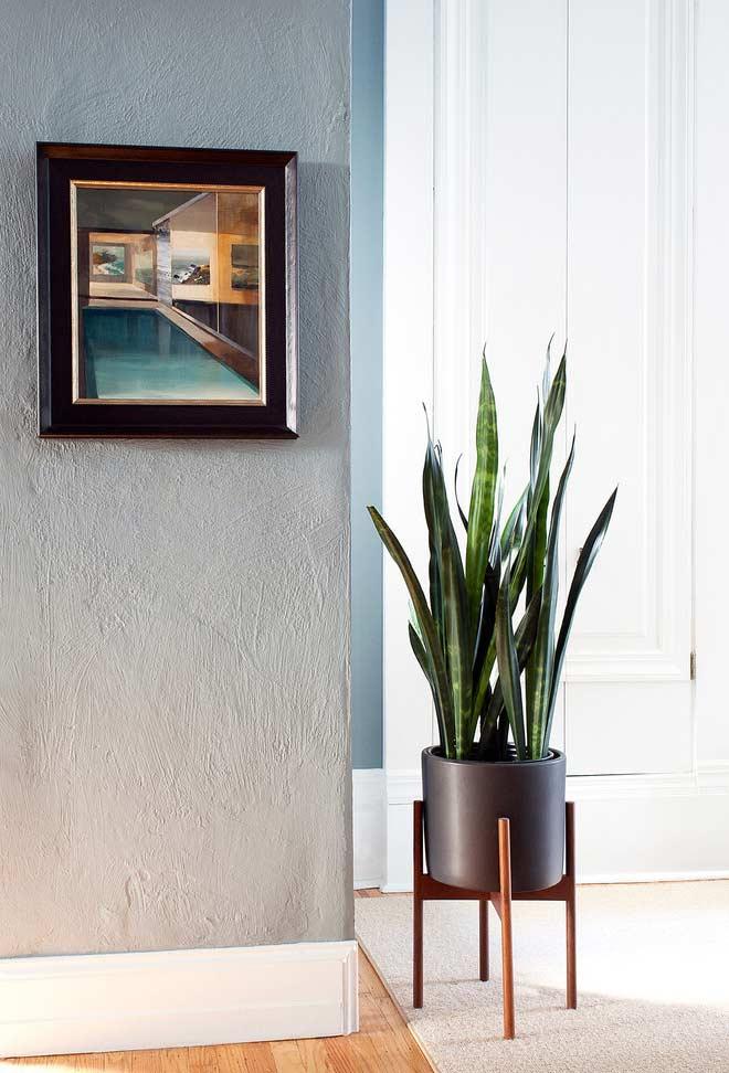 Essas plantas combinam com quadros