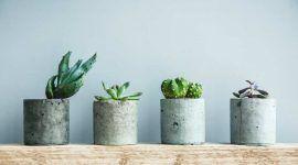 Como cuidar de suculentas: 8 dicas essenciais para seguir