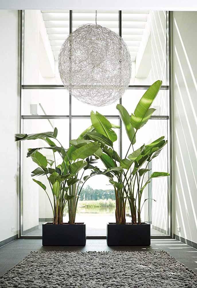 As bananeiras de jardim encontraram o vaso e o local ideal para se desenvolverem; lembre da regrinha: vaso grande para plantas e lugares grandes