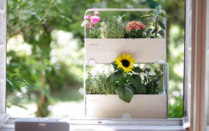 Um sobre o outro: as ervas aromáticas de baixo crescimento aprovaram a ideia