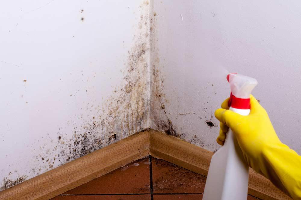 Como tirar cheiro de mofo: dicas caseiras para eliminar o problema