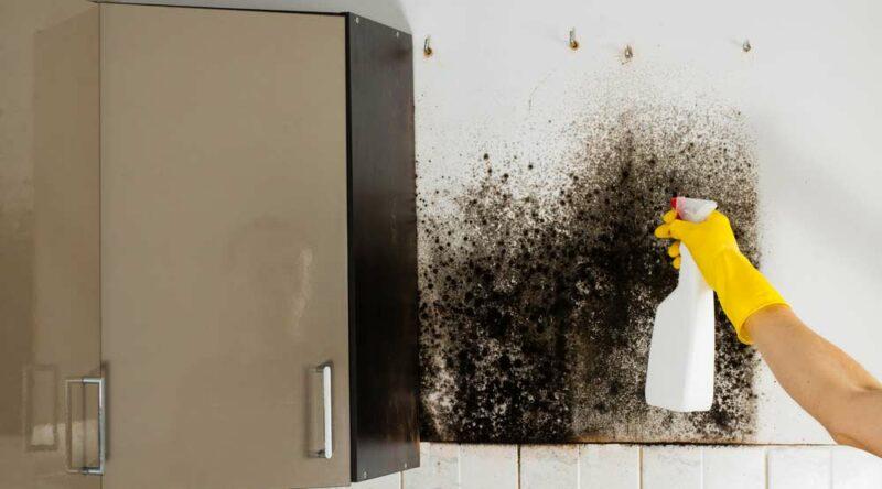 Como tirar mofo da parede: 5 soluções práticas e caseiras