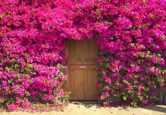 Cerca viva primavera