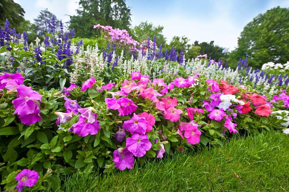 Jardim com azaleias