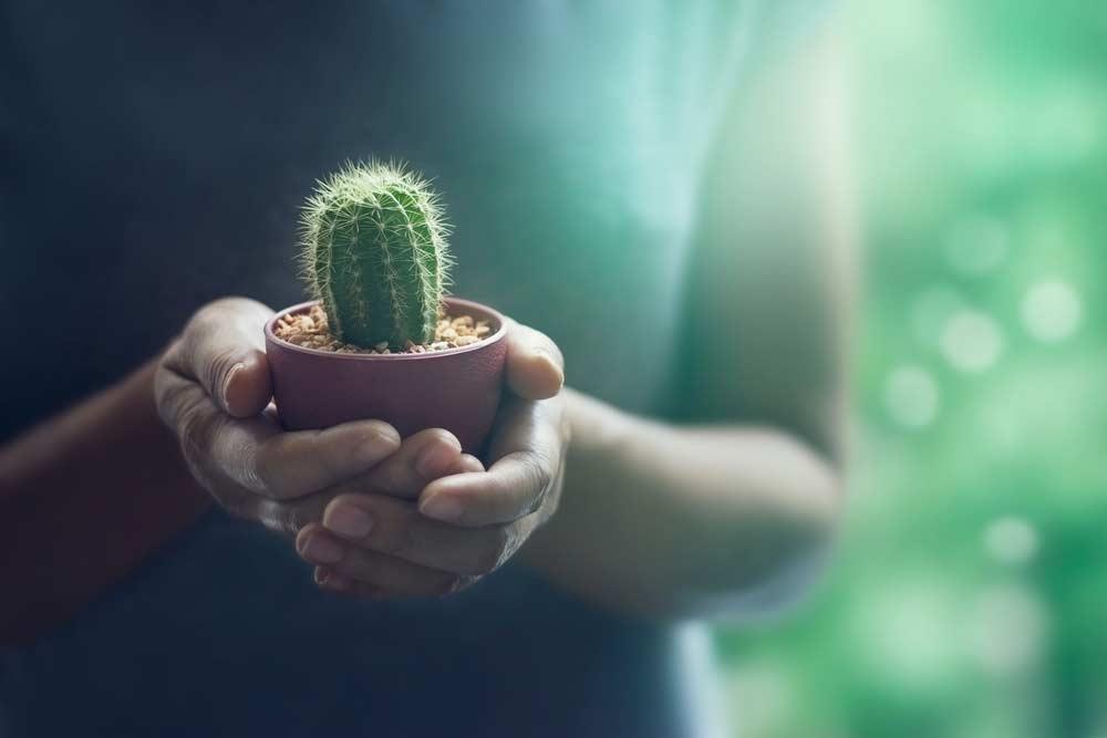 Como cuidar de cactos: dicas completas para plantar e manter