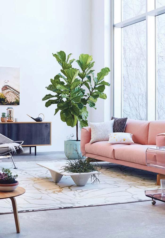 Deixe a planta se desenvolver mais em ambientes grandes