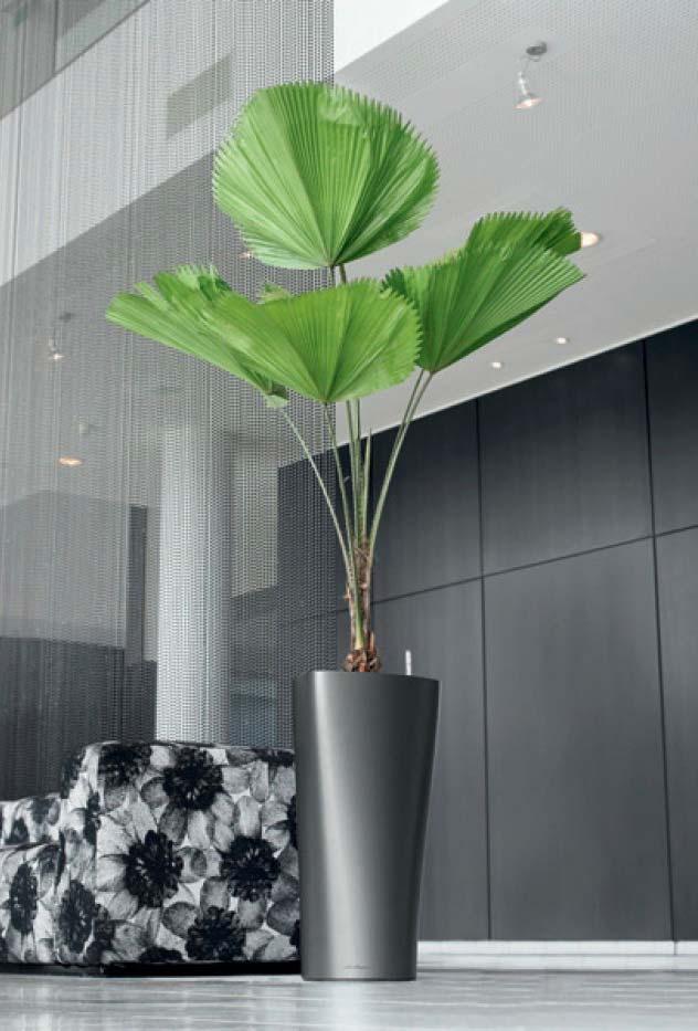 Palmeira em ambiente amplo