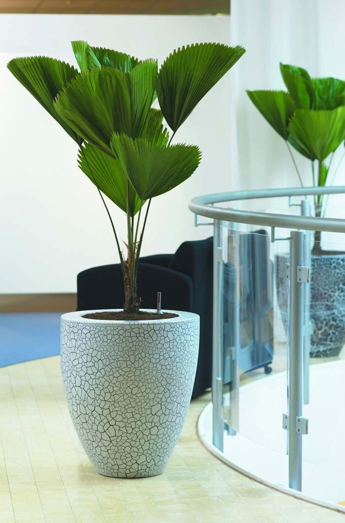 Ambiente sóbrio e clean com palmeira