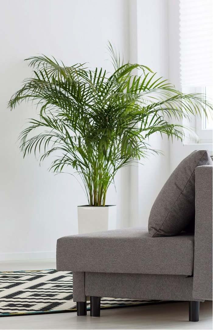 Bambu areca descontraindo o ambiente da sala