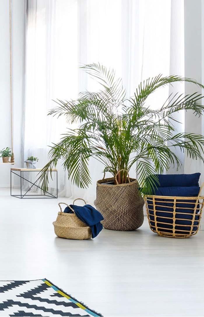 Bambu areca em cesto de vime