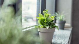 Plantas ornamentais: 60 fotos para trazer o verde à sua casa