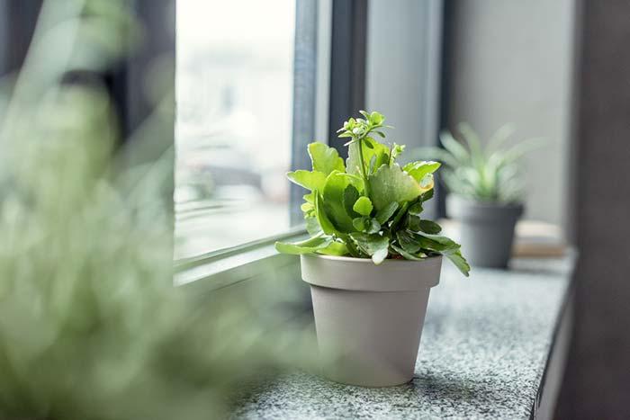 Planta na decoração