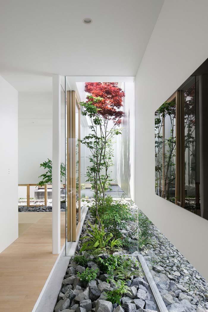 Plantas crescendo em meio às pedras