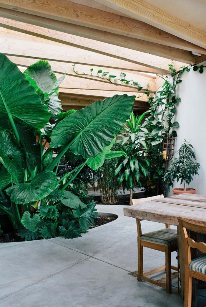 Jardim interno de taiobas