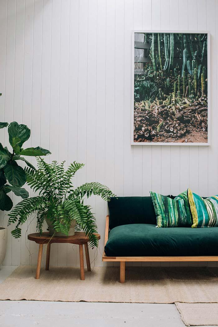 De folhas largas e com recortes bem definidos, essa samambaia marca presença na decoração