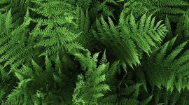 Samambaia: 60 inspirações para dispor a planta na decoração